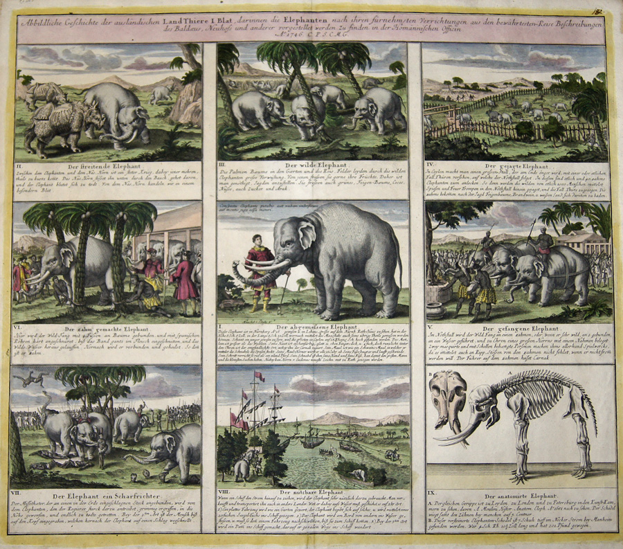 Abbildliche Geschichte der ausländischen Land Thiere I. Blat, darinnen die Elepahnten nach ihren fürnehmsten Verrichtungen aus den…